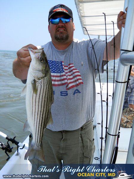 11-06-13-web-striper-inshore-3