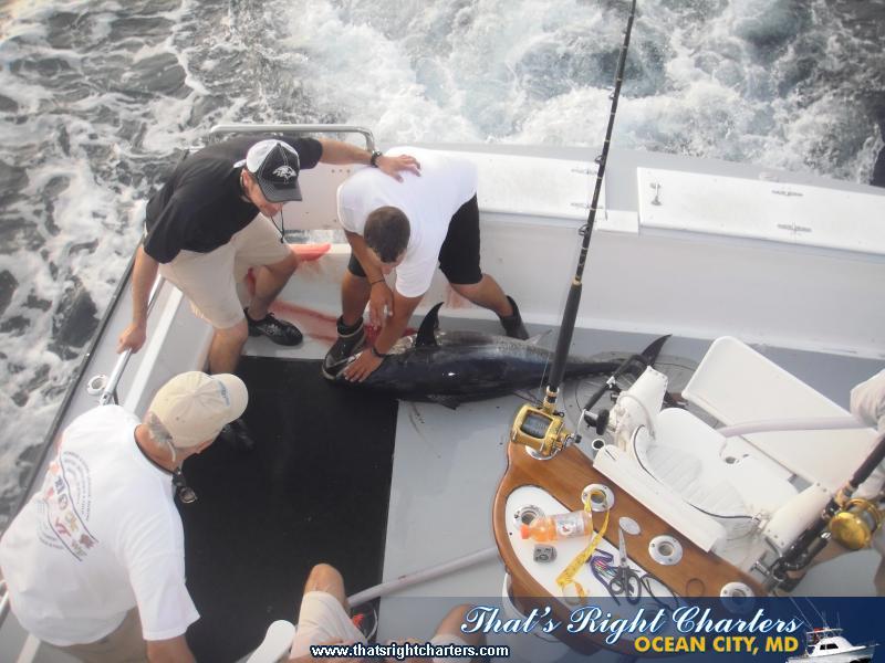 07_08_2011-bluefin