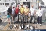 Nice Catch of Tuna
