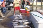 yellowfin-tuna-ocean-city-2
