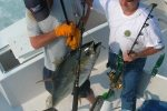 yellowfin-tuna-ocean-city-5
