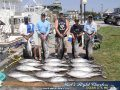 20 Yellowfin and a white released