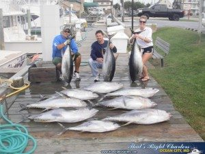 Yellowfin Success