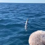 December fishing in Islamorada sailfish