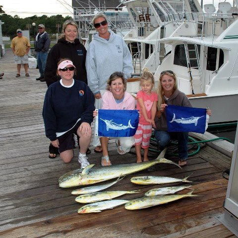 Dolphin and Marlin Releases