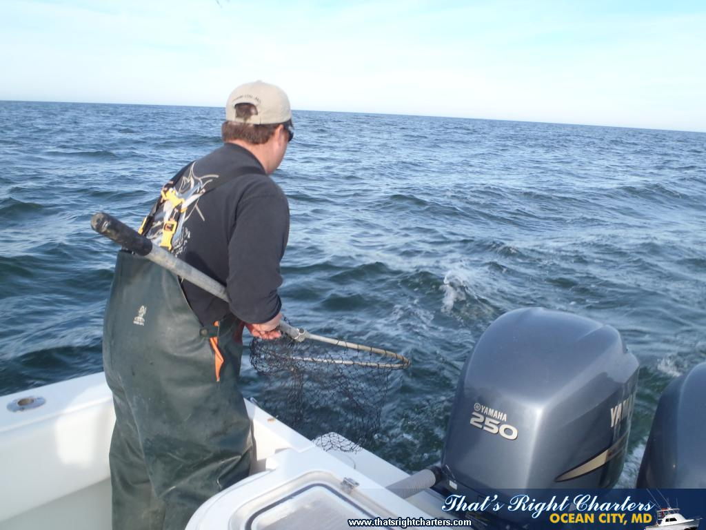 Ocean city maryland inshore fishing pictures group for Ocean city md fishing report