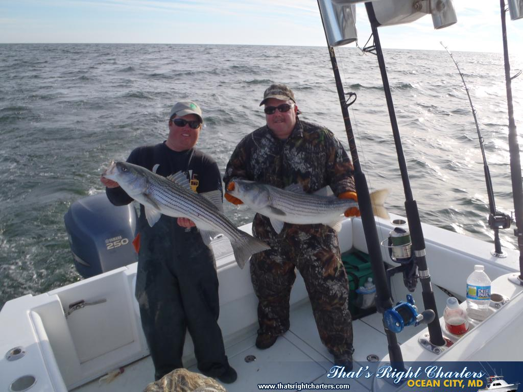 ocean city maryland inshore fishing pictures group