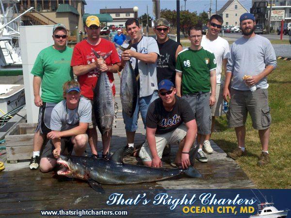 11-06-04-web-mako-shark-tuna