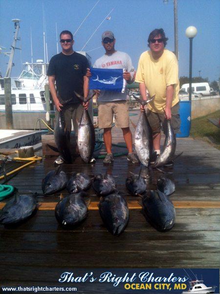 11-06-01-web-tuna