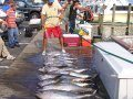 yellowfin-tuna-ocean-city-2