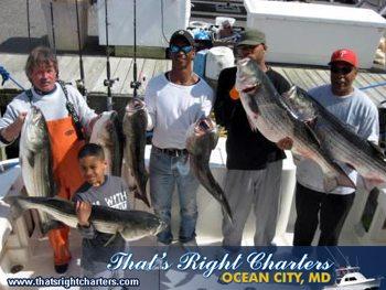 Ocean city striper fishing report group fishing charters for Ocean city fishing report